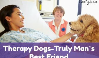 Therapy Dogs-Truly Man's Best Friend