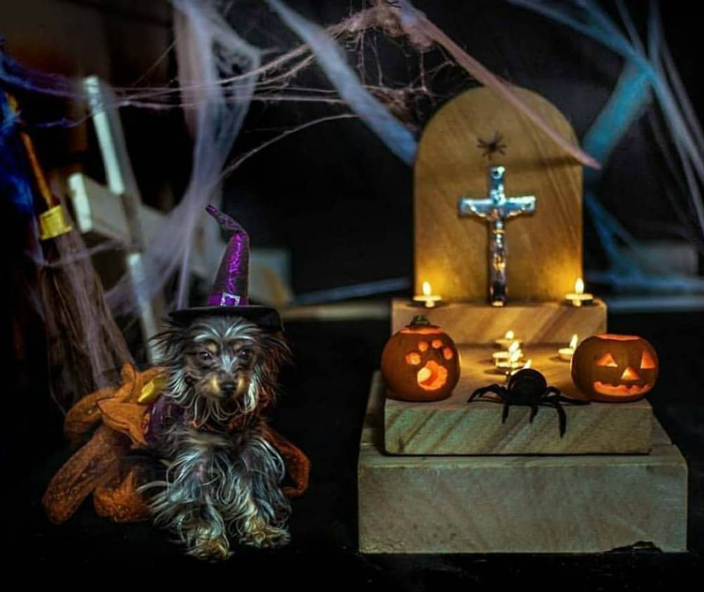 dog in witch costume