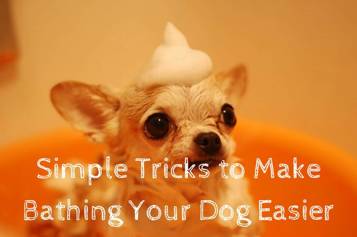 Simple Tricks to Make Bathing Your Dog Easier