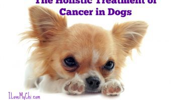 The Holistic Treatment of Cancer in Dogs