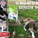10 Reasons to Adopt a Senior Dog #HillsTransformingLives