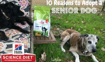 10 Reasons to Adopt a Senior Dog #HillsTransformingLives