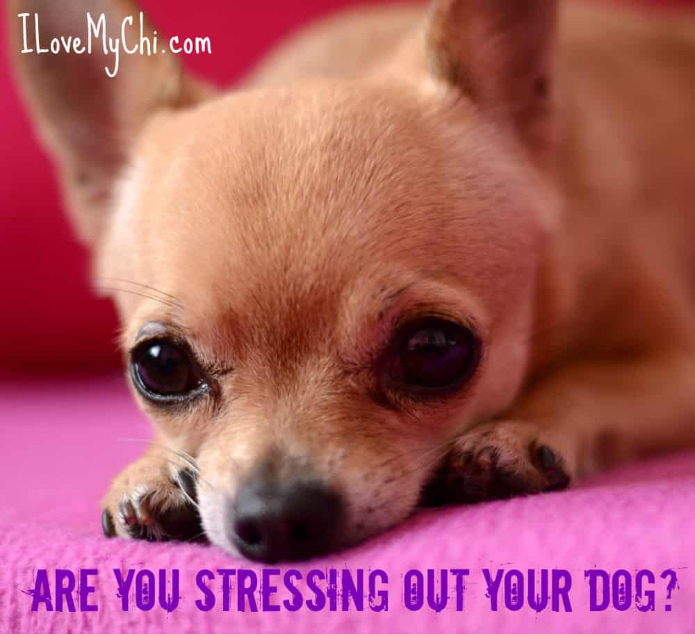Are You Stressing Out Your Dog?