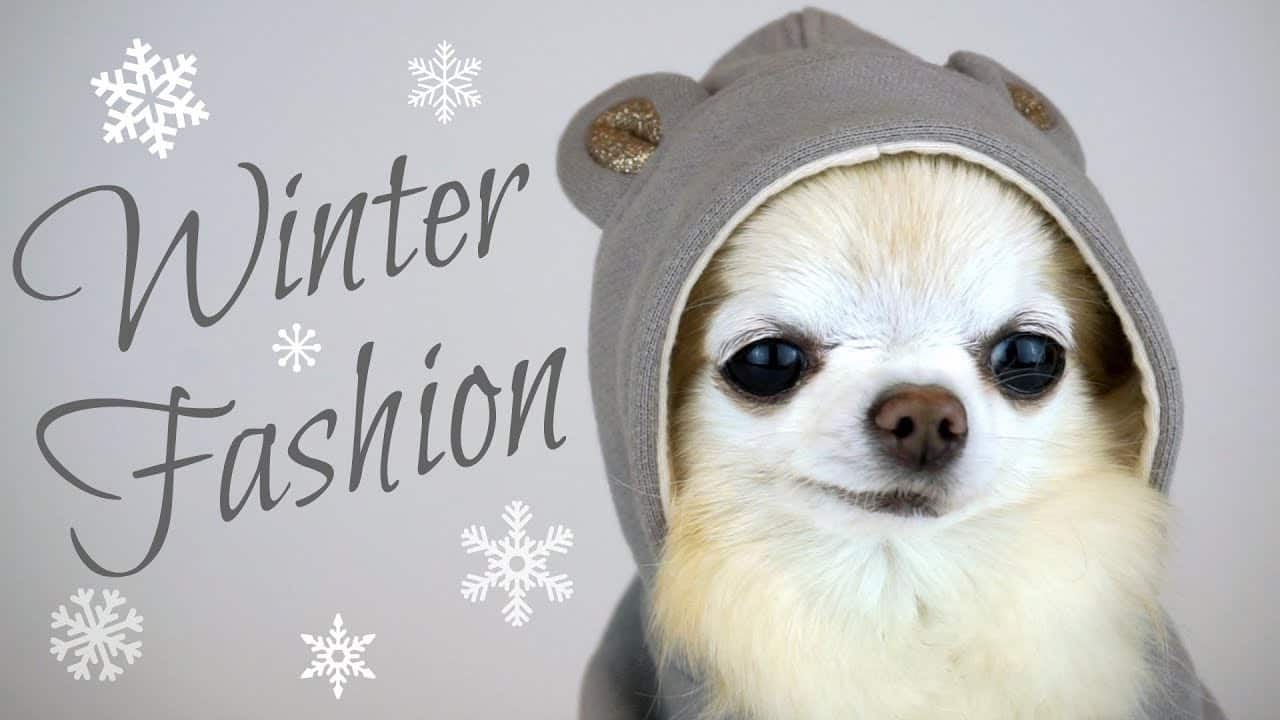 Cedric's Winter Fashion Show