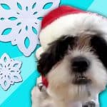 The 12 Days of Christmas Sung By Pets