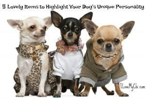 5 Lovely Items to Highlight Your Dog's Unique Personality