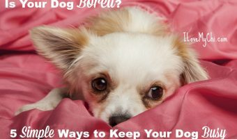 Is Your Dog Bored? 5 Simple Ways to Keep Your Dog Busy