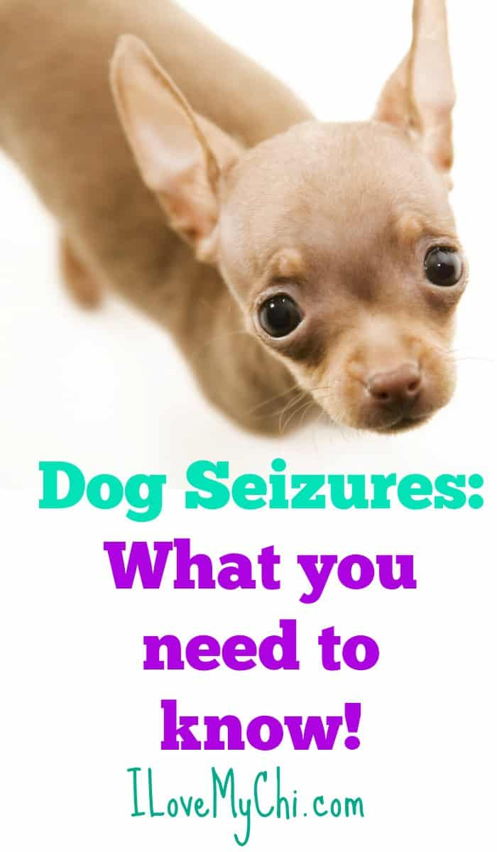 the info you need to know about dog seizures