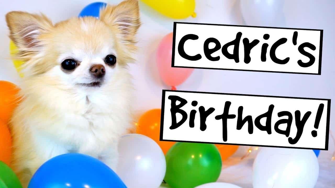 Happy Birthday Little Cedric