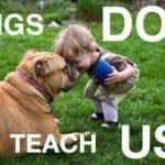 Think Dogs Don't Teach Us Anything? Think Again