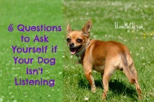 6 Questions to Ask Yourself if Your Dog Isn't Listening