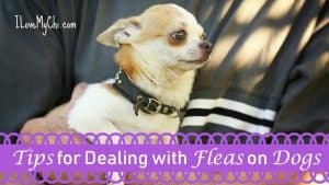 Tips for Dealing with Fleas on Dogs