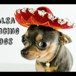Salsa Dancing Dogs Video