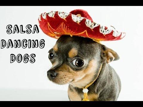 Salsa Dancing Dogs Video