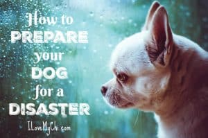 Disasters and How Best to Prepare Your Dog for Them