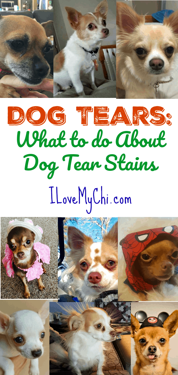 This will help you will learn about what causes your dog to have tear stains around the eyes and what you can to do to treat it and remove it.