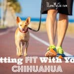 Getting Fit With Your Chihuahua