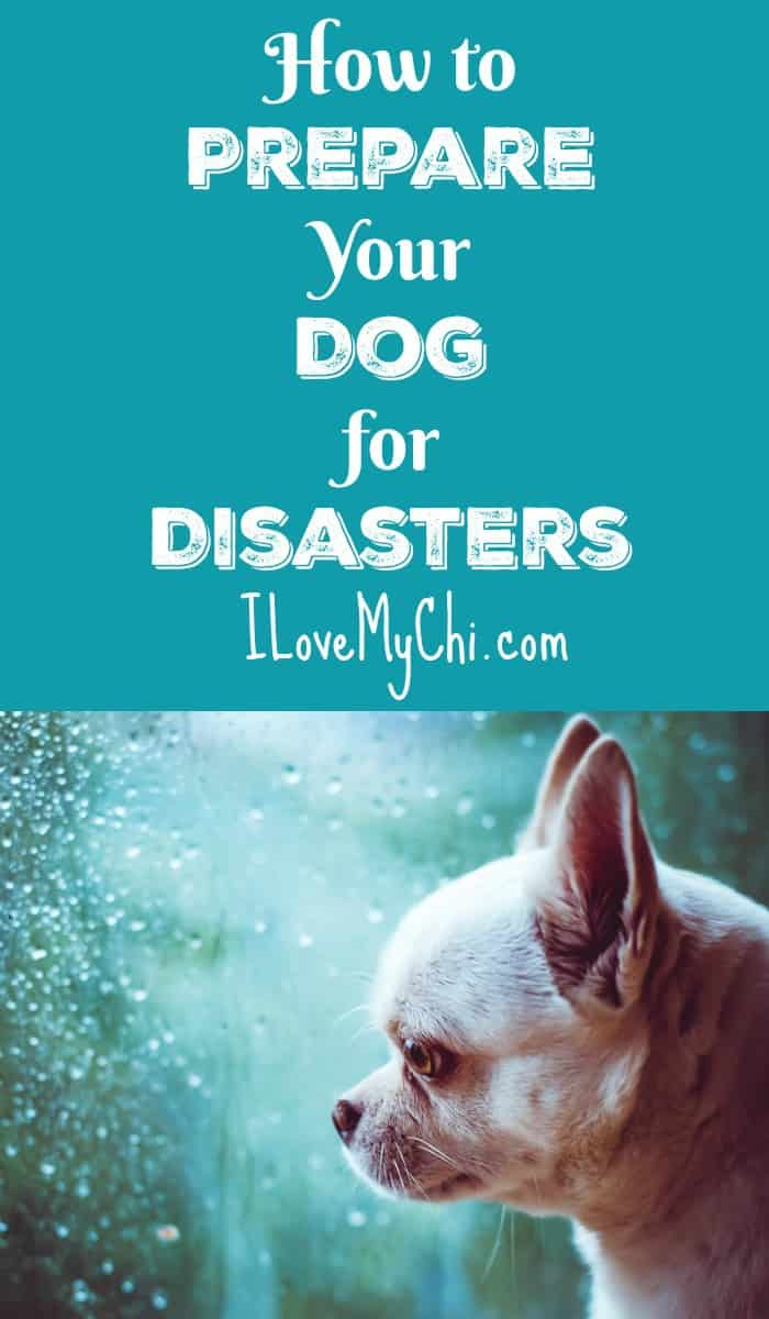 Be prepared ahead of time for emergencies and disasters and have a plan for what to do with your pet when one hits. It could be a matter of life or death.
