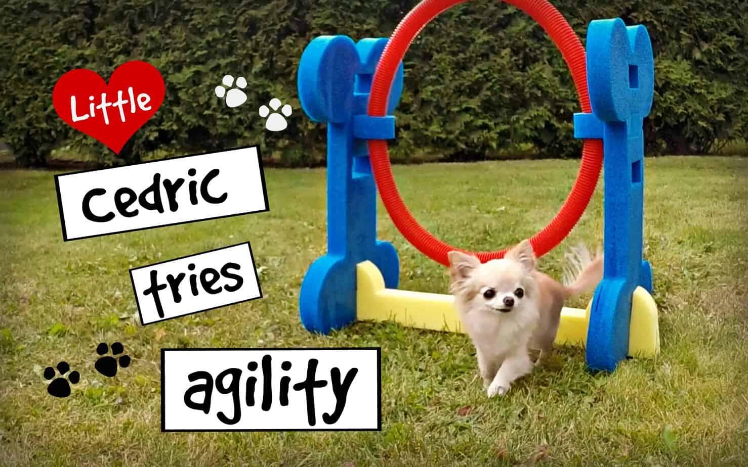 Cedric Does Agility