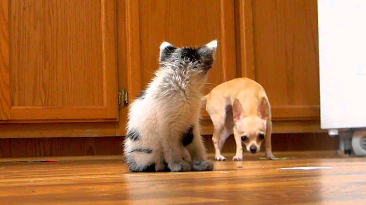 Chi and Kitty Get To Know Each Other