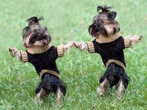 Dancing Doggies