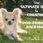 The Ultimate Guide to Creating a Dog-Friendly Backyard