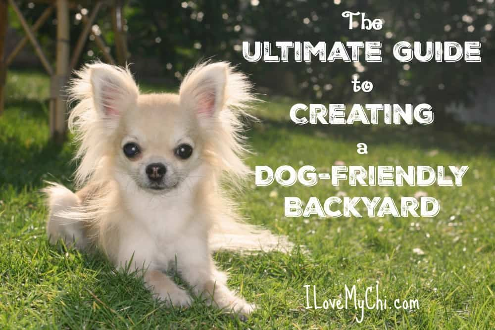 The Ultimate Guide to Creating a Dog-Friendly Backyard | I Love My