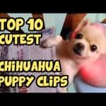 Adorable Puppy Video Clips