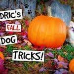 Cedric Dances With Pumpkins