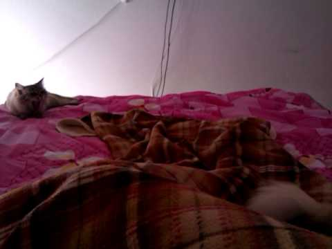 Chihuahua Slumber Party