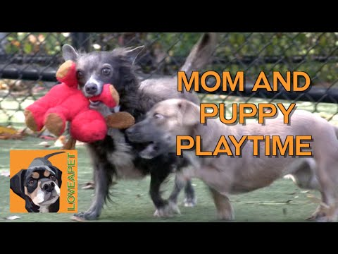 Mom and Daughter Rescue Chis Play