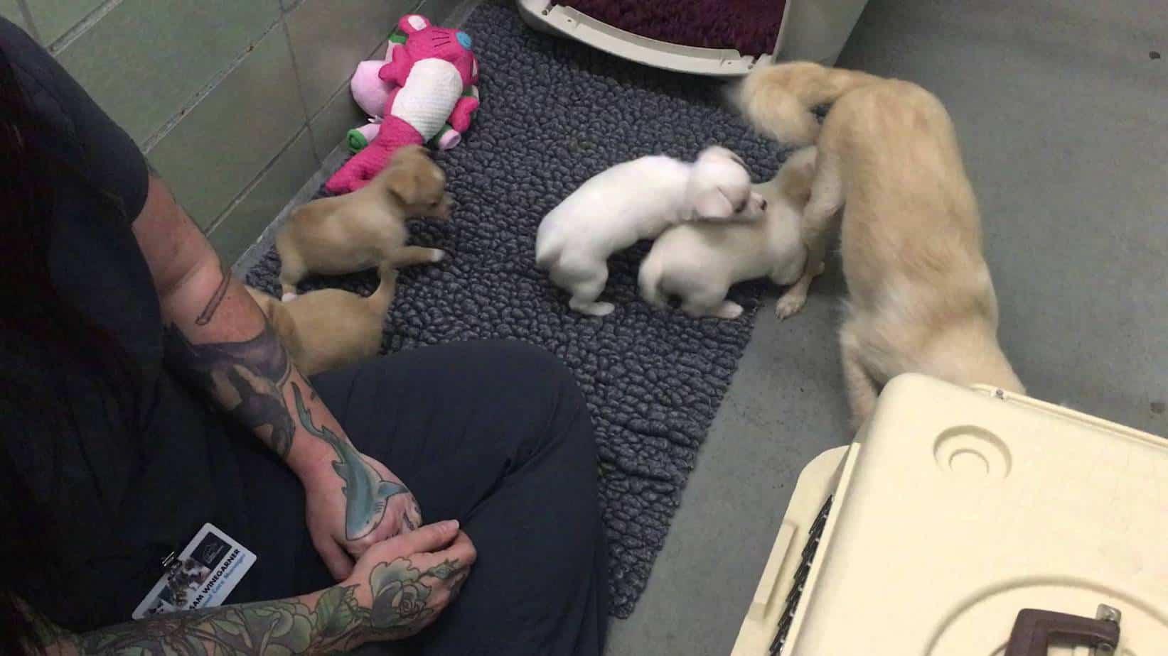 Sad Mama Chi Reunites With Her Babies