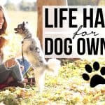 15 Life Hacks for People Who Have Dogs