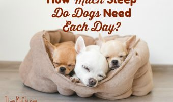How Much Sleep Do Dogs Need Each Day?