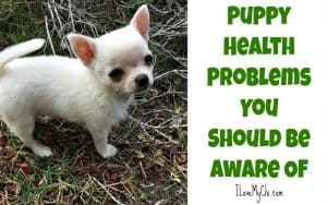 _Puppy Health Problems You Should Be Aware Of
