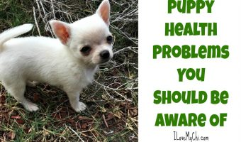 Puppy Health Problems You Should Be Aware Of