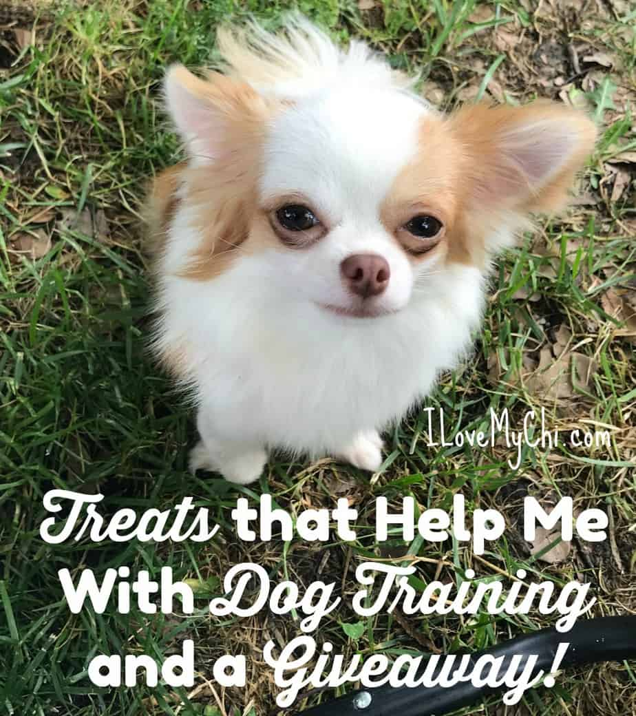 Treats that Help With Dog Training and My 6 Best House Training Tips!