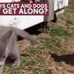 Lola loves Kitties