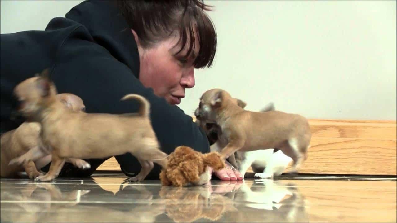 Love That Puppy Energy