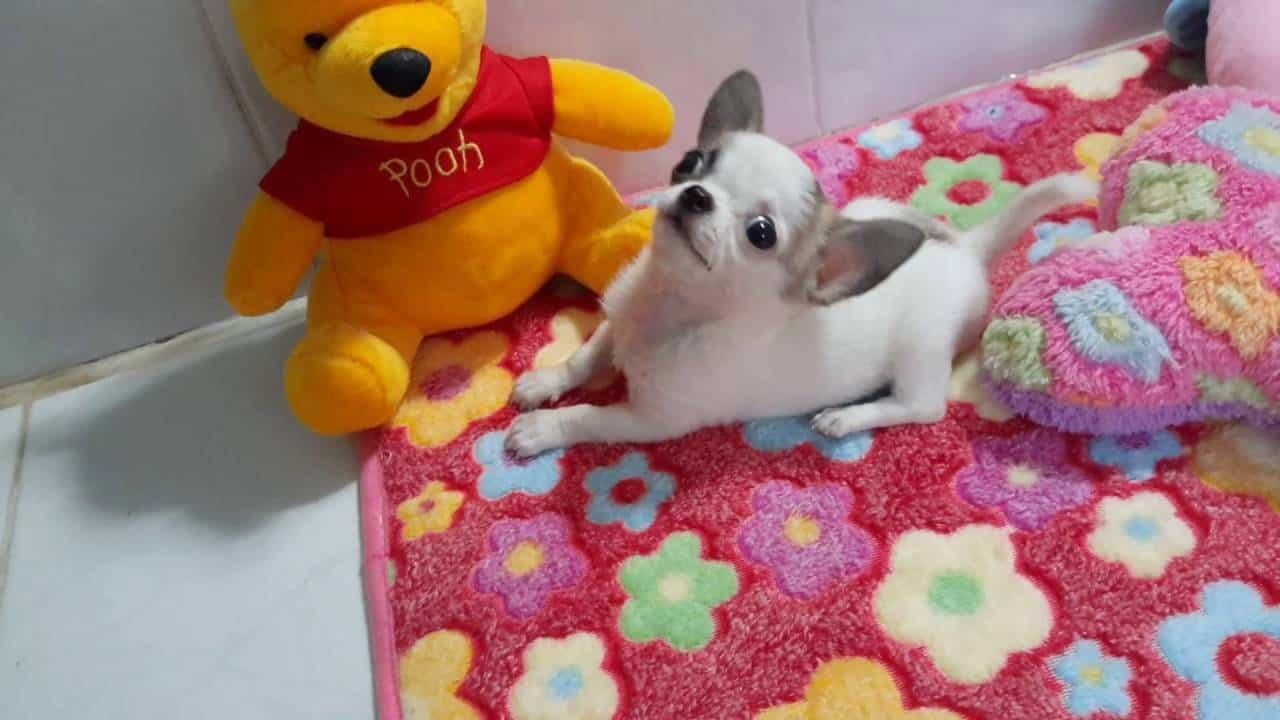 Sweet Puppy Girl