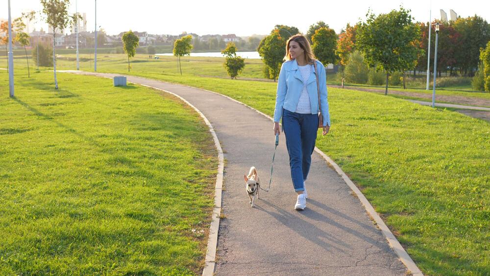 woman walking chihuahua