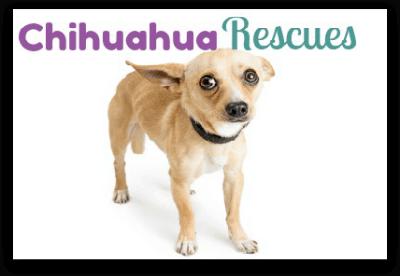 Chihuahua Rescues