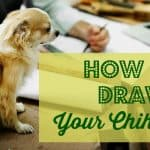 How to Draw Your Chihuahua