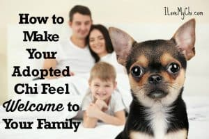 How to Make Your Adopted Chi Feel Welcome to Your Family