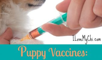 Puppy Vaccines 3 Important Questions to Ask Your Vet