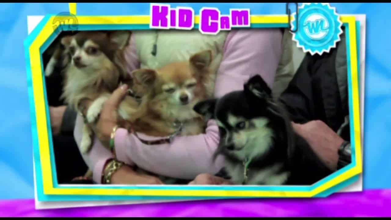 Kid Handlers at a Chihuahua Dog Show