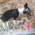 Playful Pups in Pet Store Window
