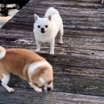 The Dock Dogs