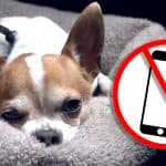 What Pancho Thinks of Cellphones