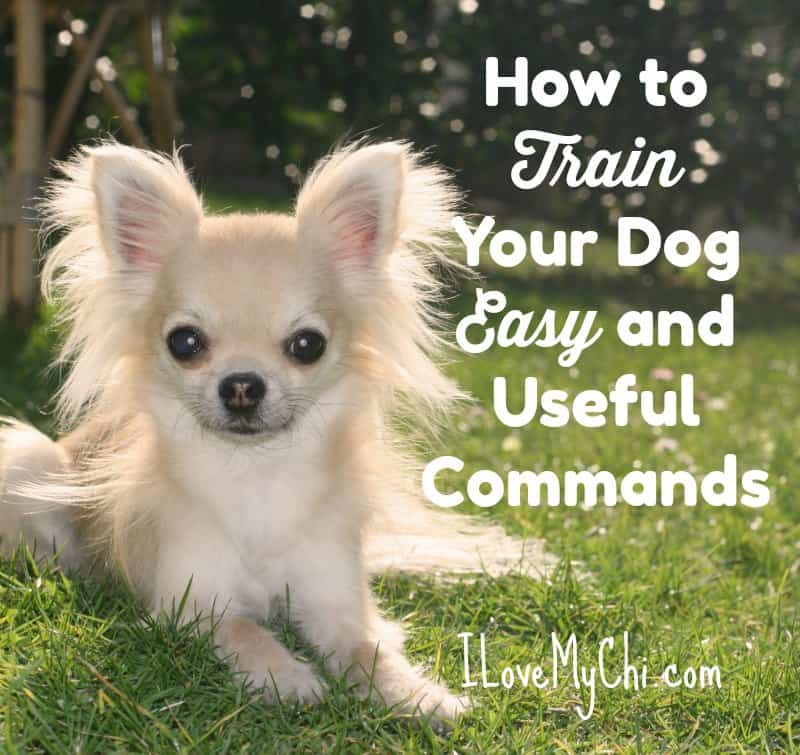 How to Train Your Dog Easy and Useful Commands